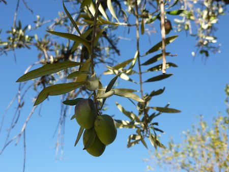 Posada Verde Oliva